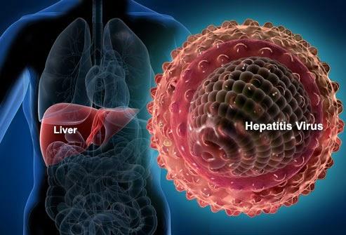 hepatita b c